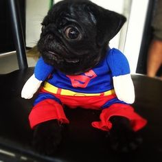 This face is killing me LOL! #pugs