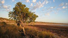 Australia's Barrow Island surveyed on human life 8,000 years-ago
