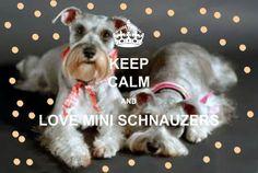 Keep Calm ANd LOVE Mini Schnauzers!!!