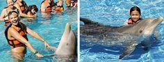 Oahu Dolphin Royal Swim - Sea Life Park