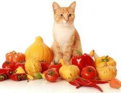 frases sobre cachorros  Receitas Caseiras de Comida de Gato