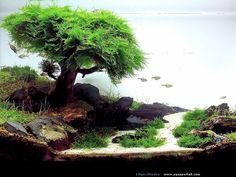 aquascape   aquarium d'aquascape japonais