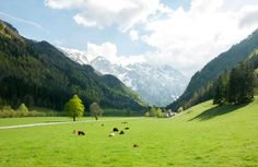 Slovenia's beauty is found not so much in its cities, but in its green countryside