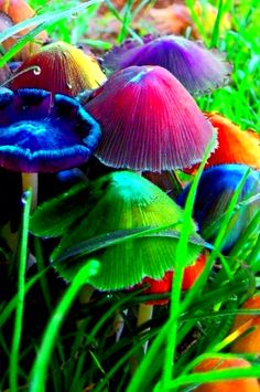 rainbow mushrooms are they real? Rainbow Colors, Vibrant Colors, Colours, Neon Colors, True Colors, World Of Color, Color Of Life, Rainbow Promise, Color Harmony
