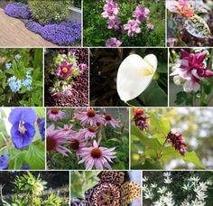 Un quadrato di giardino: Calendario 2016 con le foto degli utenti-pdf-free - BUON ANNO! (1/1)
