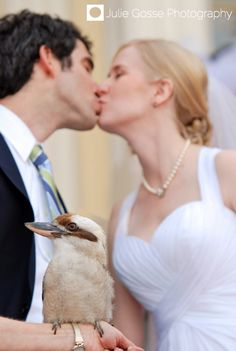 It's a Kookaburra! Have a special guest animal ambassador make an appearance on your special day! #WeddingsatMDZoo