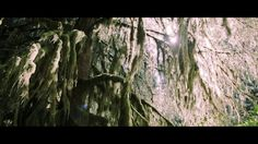 Video Washington State: Olympic National Park - Between Rainforest and Vancouver Island