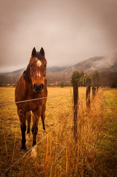 Cades Cove Horse. #Smoky #Mountains #National #Park #Smokies #Tennessee #vacation #wildlife #Cades #Cove
