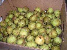 When To Pick & How To Ripen Pears