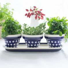 HERBS / FLOWERS POTS SET Polish Pottery from Boleslawiec Classic patterns for those that know that sometimes less is more :)