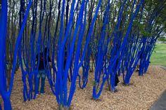 Mayor Parker And Volunteers Paint The Blue Trees - Houston Press. Australian artist Konstantin Dimopoulos.