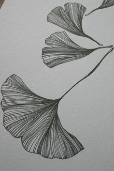 Discover thousands of images about Leaf / Ginko / Feuille / Tattoo / Graphic / Ginkgo Biloba / Mamie / Grand-mère Leaf Drawing, Painting & Drawing, Botanical Illustration, Illustration Art, Blatt Tattoos, Leaf Art, Leaf Tattoos, Bird Tattoos, Feather Tattoos