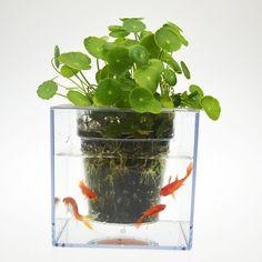 Clear Tube Plant Pot/Flower Pot Self-Watering Planter Fish Tank Aquarium Water Plants, Water Garden, Potted Plants, Indoor Plants, Fish Garden, Water Water, Aquaponics System, Aquaponics Fish, Aquaponics Greenhouse