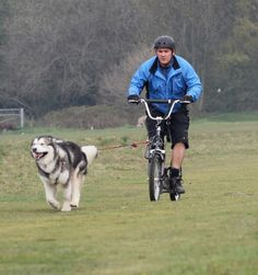 Lee and Blade, an Alaskan Malamute, having fun on their Pawtrekker Dog Scooter
