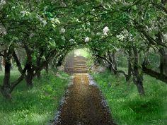 The Secret Garden..