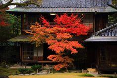 古風な木造建築と趣きあるもみじ 秋の無鄰菴 Japanese Architecture, Colored Leaves, Autumn Leaves, Kyoto, Fall, Japanese Gardens, Plants, Beautiful Scenery, Paisajes