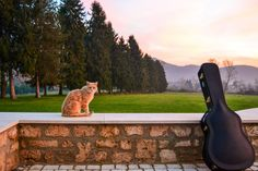 Cat at sunset by Agnese Caliò on 500px