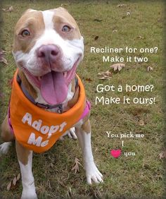 Della is an adoptable pit bull terrier searching for a forever family near Helena, AL. Use Petfinder to find adoptable pets in your area.