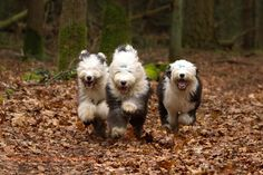 https://flic.kr/p/bnqzCC   happy puppy run   from left to right Anne, Bruce and Dexter