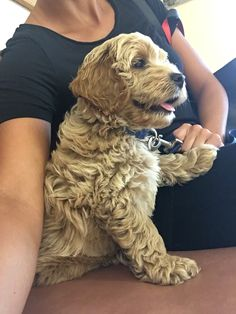 Simple Dog Care Advice For A Happier, Healthier Dog – Info About The Dog Cheap Dog Food, High Quality Dog Food, Yorkshire Terrier Puppies, Dog Runs, Cockapoo, Outdoor Dog, Shelter Dogs, Dog Care, Dogs