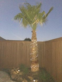 I had to order 200 strand solar lights for the Palm Trees and the pillars. Lights won't all be finished until December 2nd.