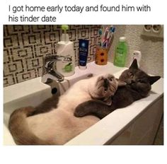 Latest cat memes collection of the week. Check these top 46 funny cat memes that will cure your bad day with a good laugh. Funny Animal Memes, Cute Funny Animals, Cute Baby Animals, Funny Cats, Funny Memes, Hilarious, Cute Cat Memes, Farm Animals, Cute Cat Gif
