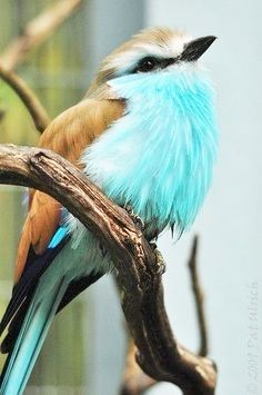moineau turquoise ッ bird by pat ulrich