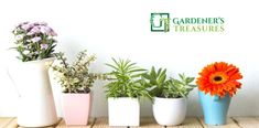 Gardener's Treasures is the most famous #garden #nursery in #Adelaide, SA. where you can find many colourful #Australian #native #plants and #flowers at affordable prices.