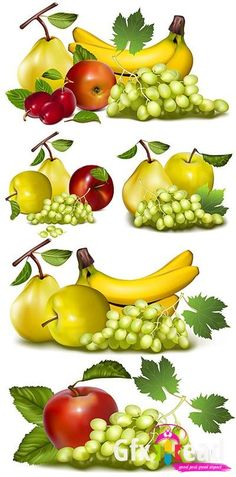 Grapes, bananas, apples and pears vector Image Collections » Gfxhead - Download Graphics Sounds Vectors Tutorials Scripts Movies