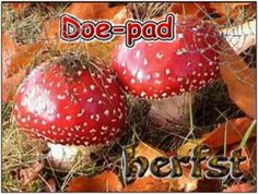 Doe-pad Herfst :: doe-pad-herfst.yurls.net