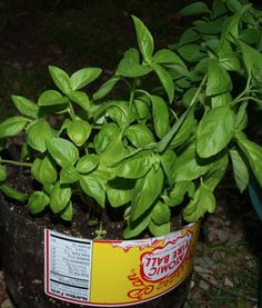 Plan for the coming warm months with these 6 Easy to Grow Mosquito Repellent Plants for Your Garden from the Quicken Loans Zing Blog.
