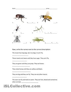 insects worksheets free | Worksheet PDF: | iNSECTS/WORMS ...