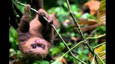 La hermosa FAUNA de Costa Rica - YouTube