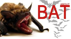 Bats just love mosquitoes and can eat hundreds in a single hour, plus they eat other pests that you don't want in your garden! Read more about how a bat may . Bat Facts, Bats, Videos, Angel Art, Angels, Video Clip