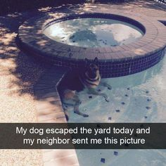 65 Of The Most Funniest Snaps Ever! #funnydogmeme