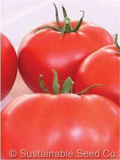 Organic Beefsteak Tomato Seeds - LB Seeds - Non-GMO, Open Pollinated, Heirloom, Vegetable Gardening Seeds - Beef Steak Herb Garden In Kitchen, Veg Garden, Garden Seeds, Herb Gardening, Garden Plants, Tomato Vine, Red Tomato, Beefsteak Tomato, Seeds For Sale