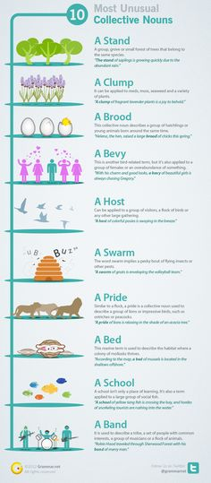 10 Most Unusual Collective Nouns Revealed and Explained | Grammar Newsletter - English Grammar Newsletter