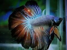 Image result for rare fish
