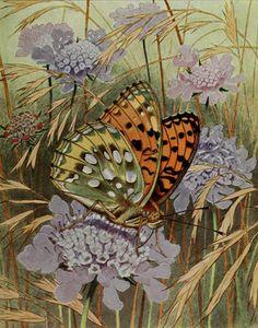 Le Moyen-Nacre (Dark Green Fritillary). Plate from 'Les Papillons Dans La Nature' by Paul A. Robert. Published 1934 by Éditions Delachaux ...
