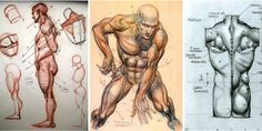 Character+Design+Collection:+Male+Anatomy