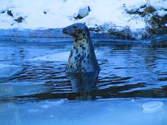 Portfolio Multimedeia: Hylje talven ihmemaassa, 2