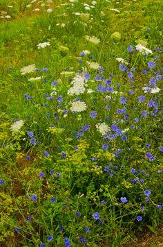 Summer of 2012: Drought tolerant plants
