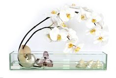 "Emilio Robba's White Phalaenopsis & Seashells - 24"" Plate Glass Planter (2014 Collection)"