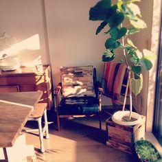 椅子を移動したら、ポカポカ日が当たり、夫がすきあらばここに座って本を読んだりコーヒー飲んだりくつろごうとして、それはいいとして、しかし、あたしはめちゃ床を磨いたり、観葉植物のお世話している横でそんなにくつろがれると、あれよね?なあに?ちょっと穏やかじゃないわよね。  でも今日は床も窓も磨けたし、観葉植物の鉢も大きいのにかえれたし、まだでていた(!)扇風機もむすこの夏服もしまえたし、とてもいい日だ✨ - @yuu1026- #webstagram