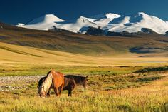 Trans-Siberian Railway (this picture is Mongolia - just beautiful!)