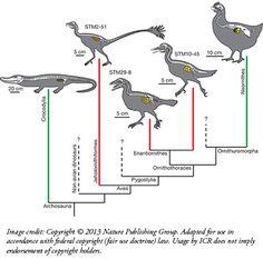 Evolutionists Scramble 'Fossil-Egg Evidence'
