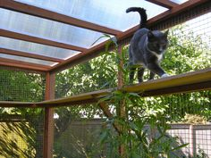 Catios! We build attractive catios and offer Catio Spaces DIY CATIO PLANS and…