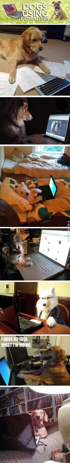 Dogs using computers