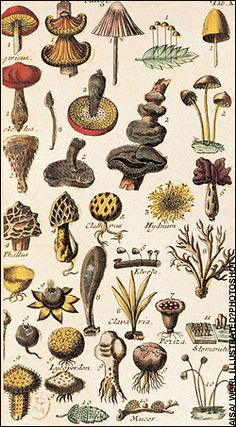 Attention to detail: botanical illustrations by Carl Linnaeus