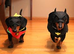 BATDOG & Robin. I just laughed for a good 10 minutes !!!